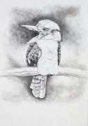 Kookaburra Graphite 60cm x 77cm