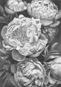 Peonies in Graphite II Graphite on Arches Paper Framed Size: 102cm x79.5cm SOLD