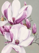 Pink Magnolias IV Watercolour on Arches Paper Framed Size: 107cm x87.5cm SOLD