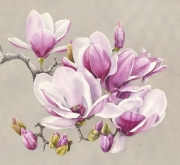 Pink Magnolias V Watercolour on Arches Paper Framed Size: 80cm x83cm SOLD