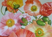Poppies Watercolour on Arches Paper Framed Size: 83cm x102cm SOLD