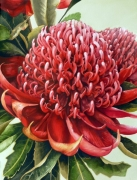Red Waratah Watercolour on Arches Paper Framed Size: 98.5cm x81cm SOL