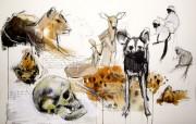 graham_jody_african_animal_studies (2)